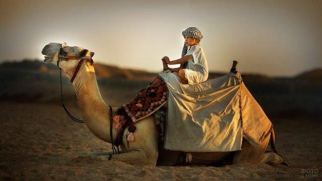 Девочка в чалме верхом на верблюде