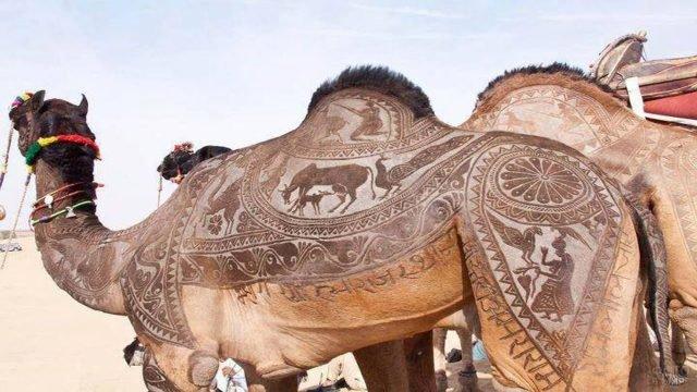 Красивые узоры на верблюде