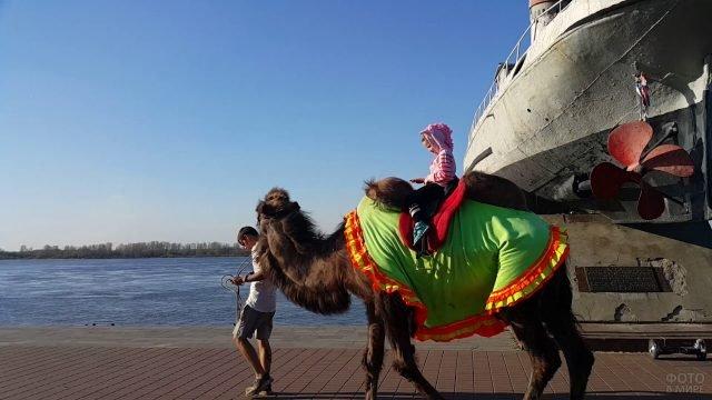 Маленькая девочка верхом на верблюде