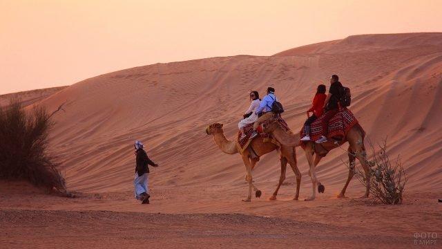 Туристы в пустыне на верблюдах