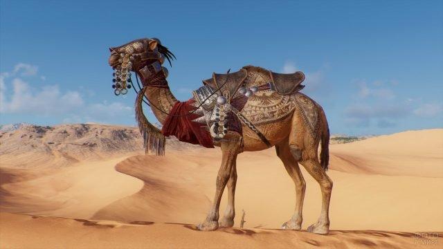 Верблюд воина пустыни