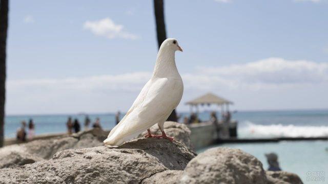 Белая голубка смотрит на море