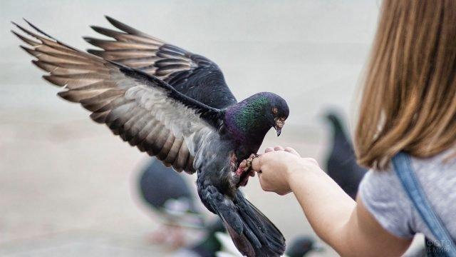 Девочка кормит с руки голубя