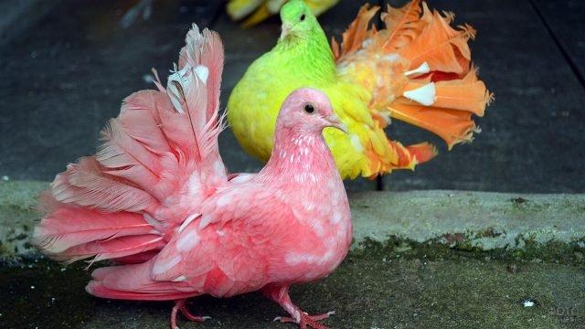 Разноцветные голуби гуляют на улице