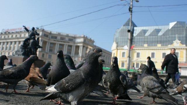 Стая голубей на фоне памятника