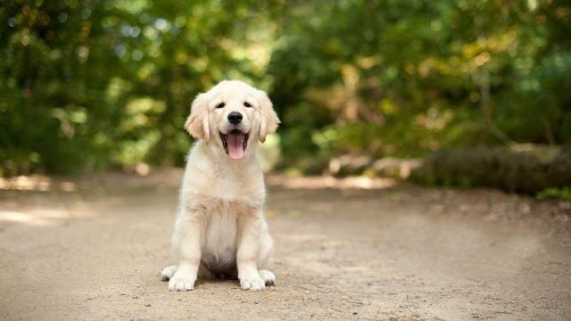 Довольный пёс на прогулке в лесу