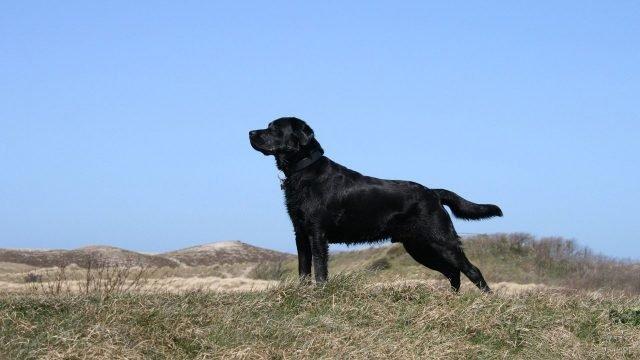 Пёс любуется природой