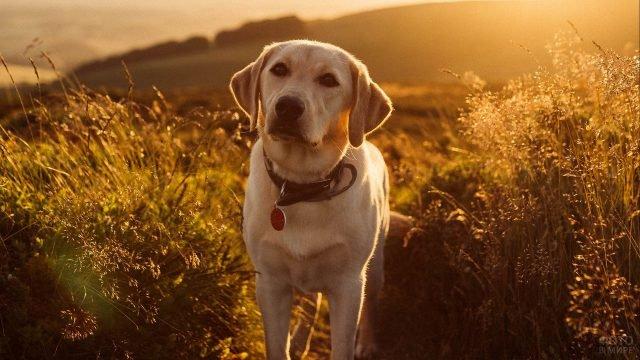 Собака и живописный пейзаж
