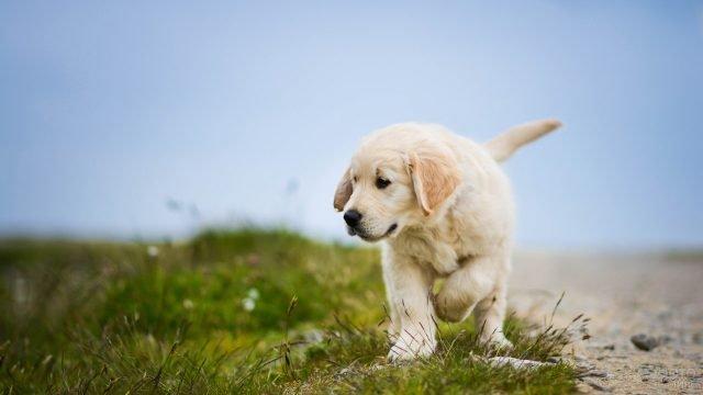 Собака заметила что-то в траве