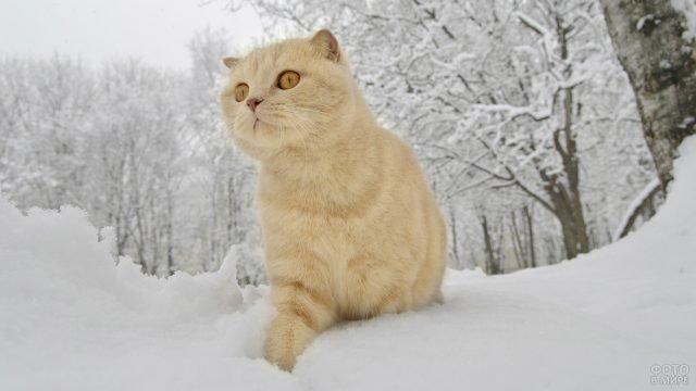 Чудной котик гуляет в заснеженном лесу