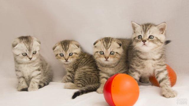 Котята играют в мяч