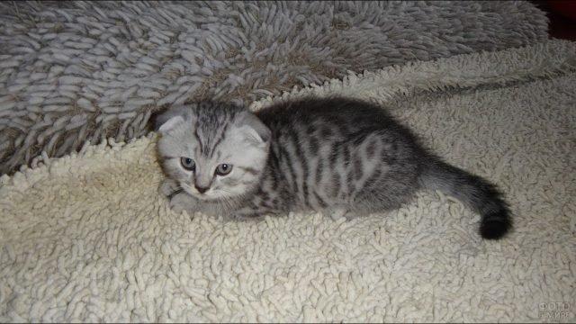 Маленький котёночек лежит на ковре