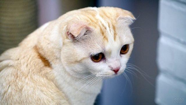 Милая кошечка смотрит сосредоточенно