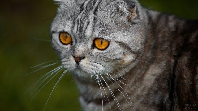 Полосатый котейка на природе
