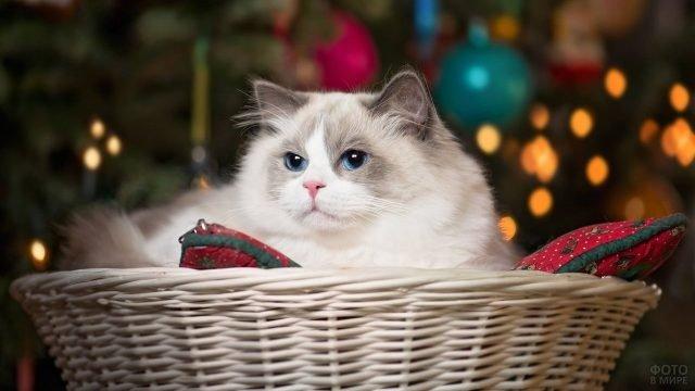 Пушистый кот в корзинке под новогодней ёлкой
