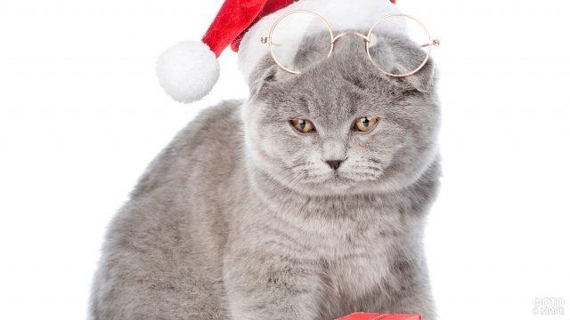 Серенький котик в очках