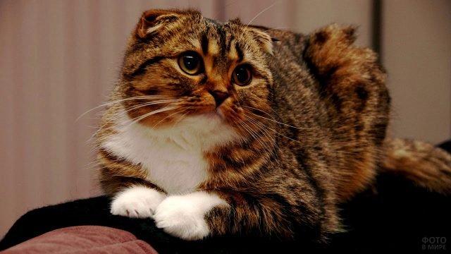 Тигровый кот с хитрым взглядом