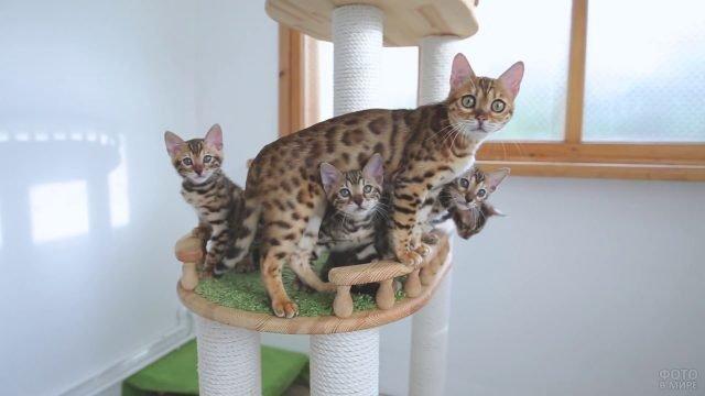 Мама кошка с котятами сидит на игровом комплексе