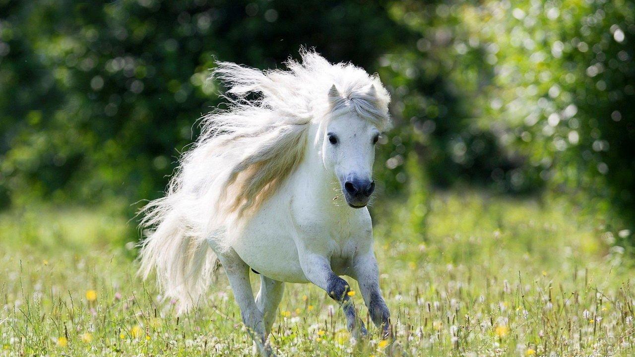 Белый пони с густой гривой мчится по цветочной поляне