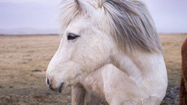 Белый пони в профиль