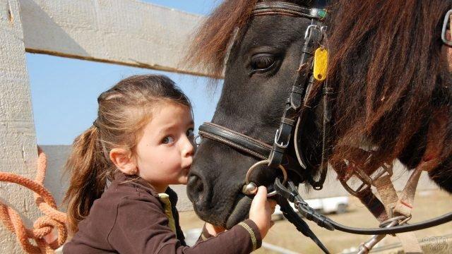 Девочка целует пони