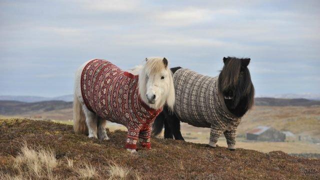 Два маленьких пони чёрного и белого цвета в вязаных одеждах