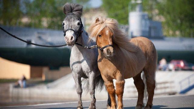 Два пони на городской улице
