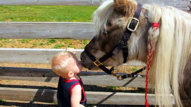 Мальчик целует пони с косичкой