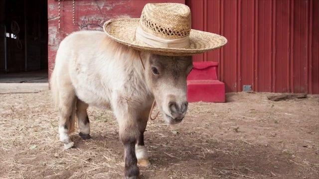 Маленький пони в соломенной шляпе