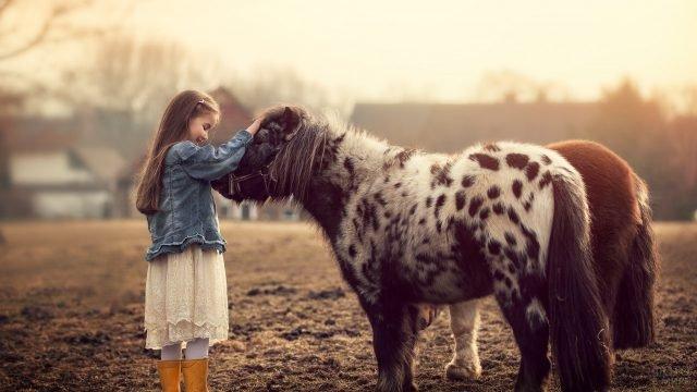 Мраморный пони позволяет девочке погладить себя