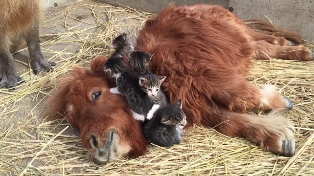 Пять котят уселись на пони