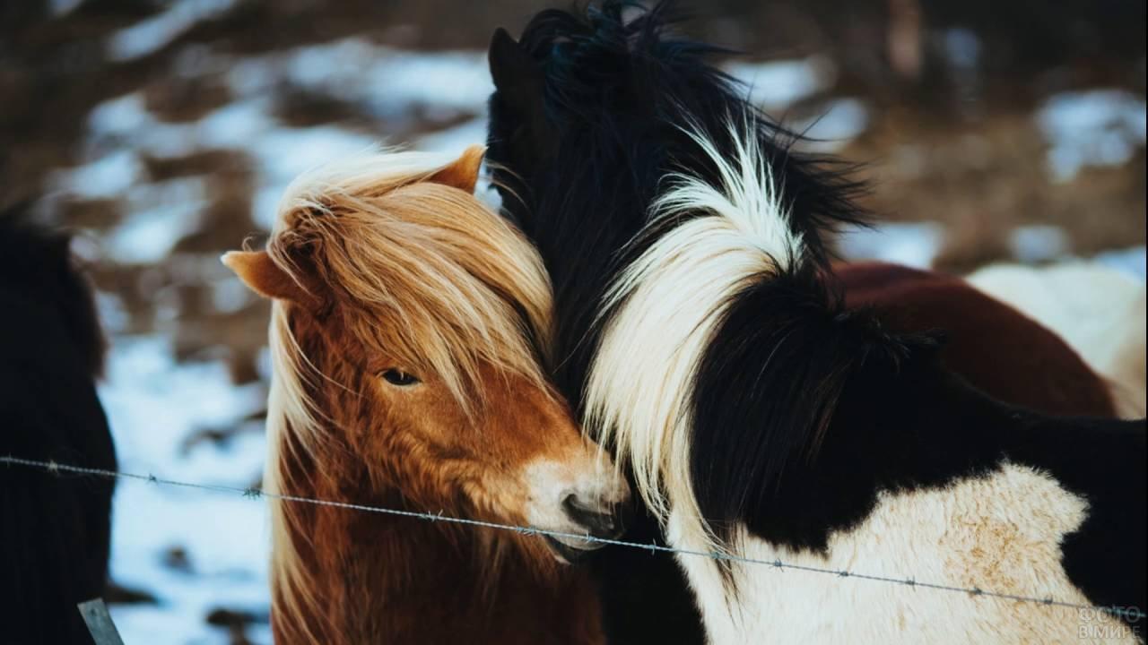 Пони обнимаются друг с другом