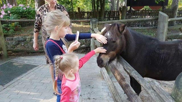 Ребятишки гладят пони по голове
