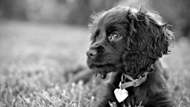 Чёрный лохматый пёсик с грустным взглядом