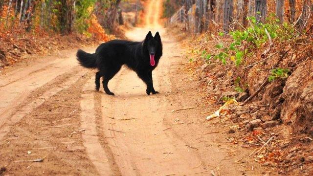 Грюнендаль на прогулке в осеннем лесу