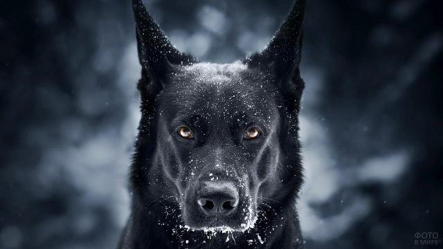 Умный собачий взгляд