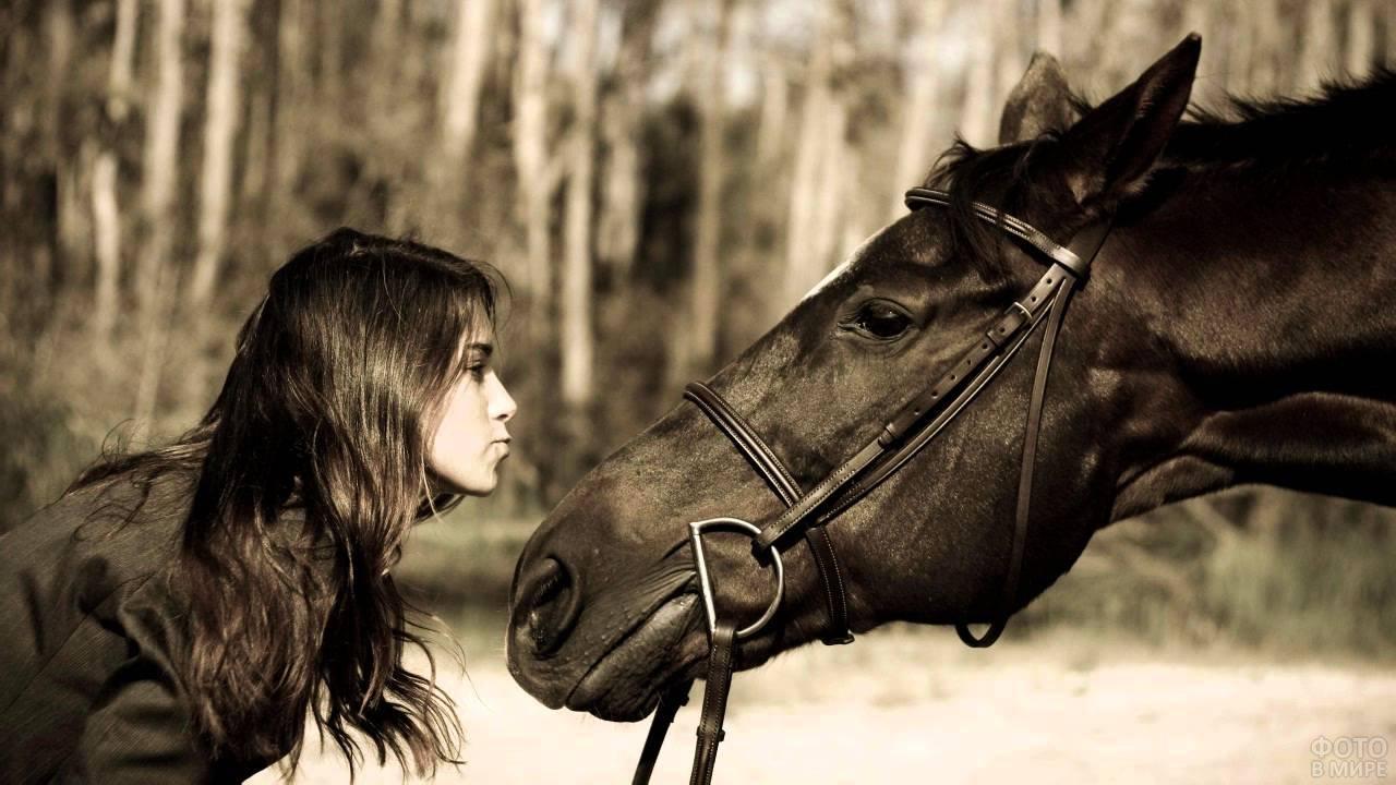 Девушка и лошадь тянутся друг к другу