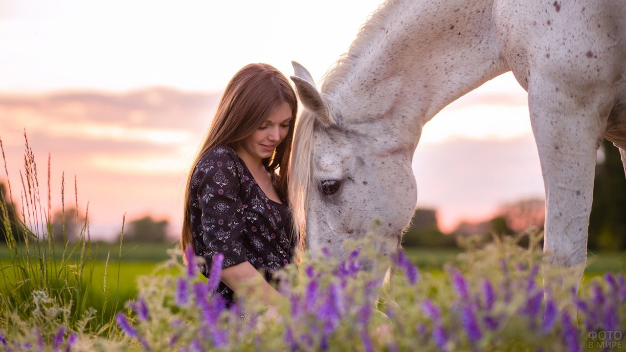 Девушка в цветущем поле с белой лошадью