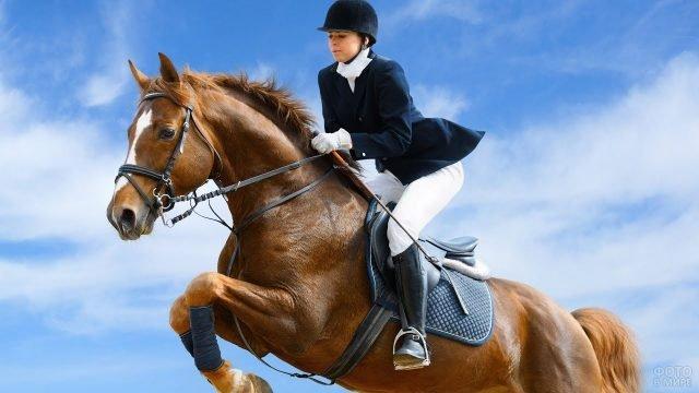 Наездница спортсменка мчится верхом на гнедом коне