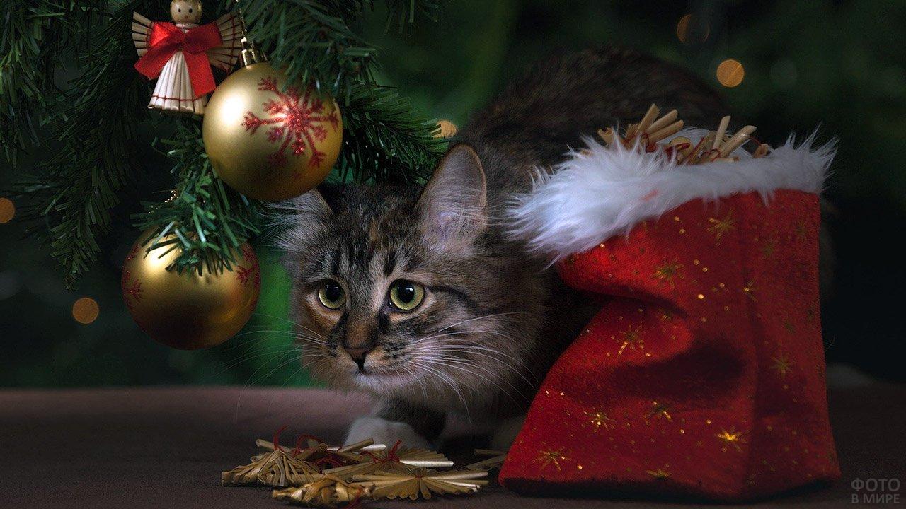 Кот смотрит на один из золотых шариков на ёлке