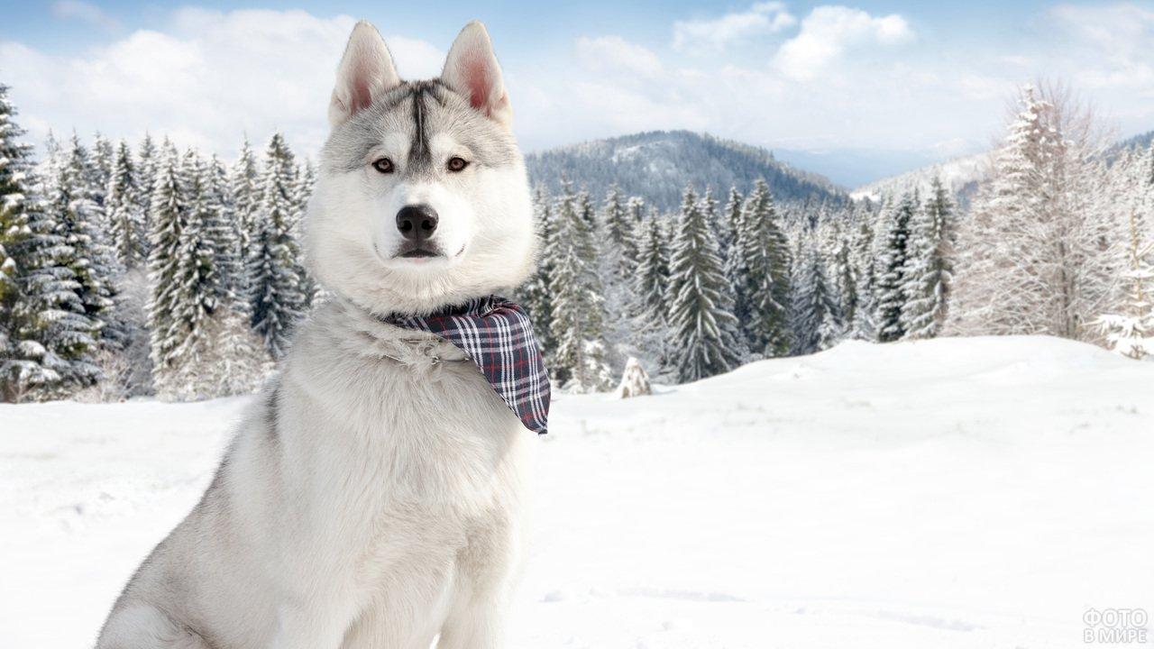 Пёс позирует зимой в лесу