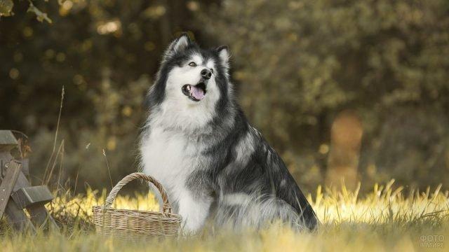 Пёсик на природе