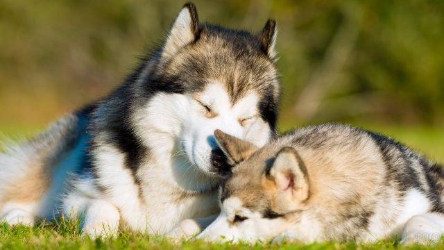 Собачки отдыхают на свежем воздухе