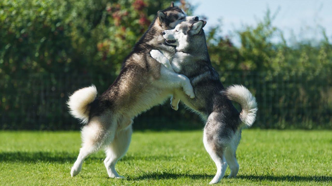 Собаки резвятся на прогулке