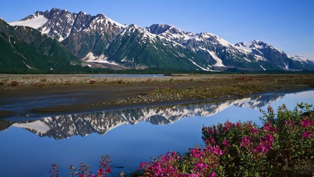 Цветущие берега реки на Аляске