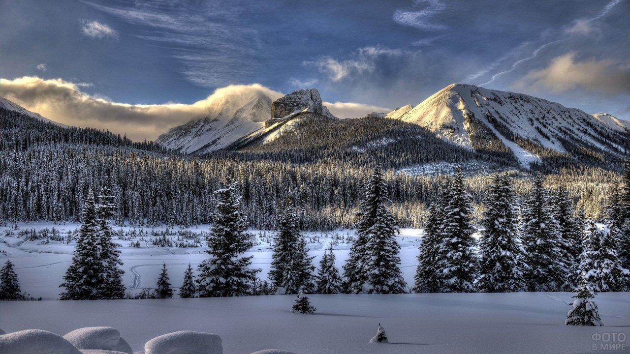 Деревья в снегу на горных склонах