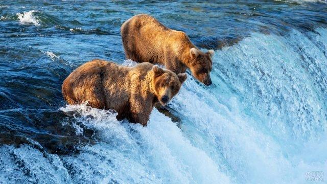 Два медведя в бурлящем потоке реки