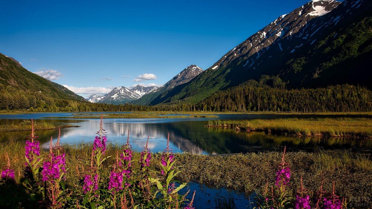 Иван-чай на берегу озера у подножия гор Аляски