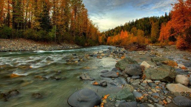 Небольшая горная речка среди осеннего леса