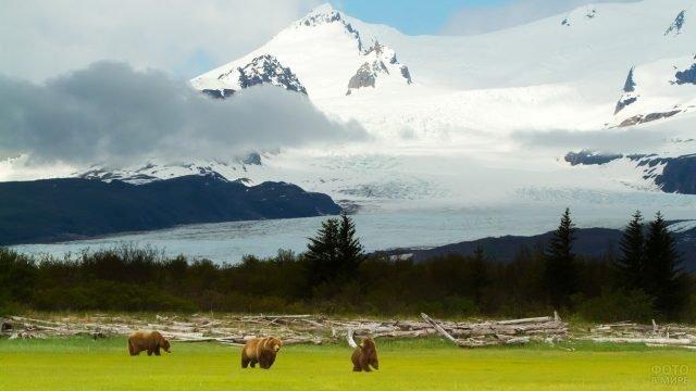 Три медведя у заснеженного склона горы